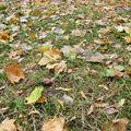 Őszi kirándulás gyerekekkel, őszi mondókák