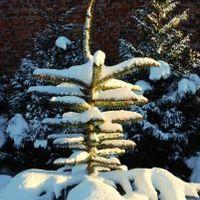 Karácsonyi versek - Karácsony fája