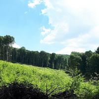 Zobákpuszta - Patacsi-mező