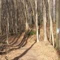 Vasárnap délutáni séta