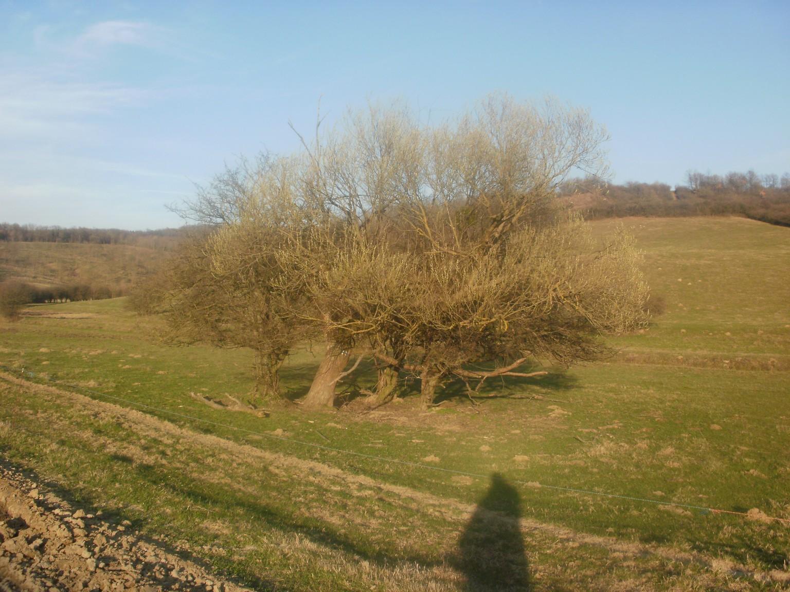 Grábóc feletti legelő