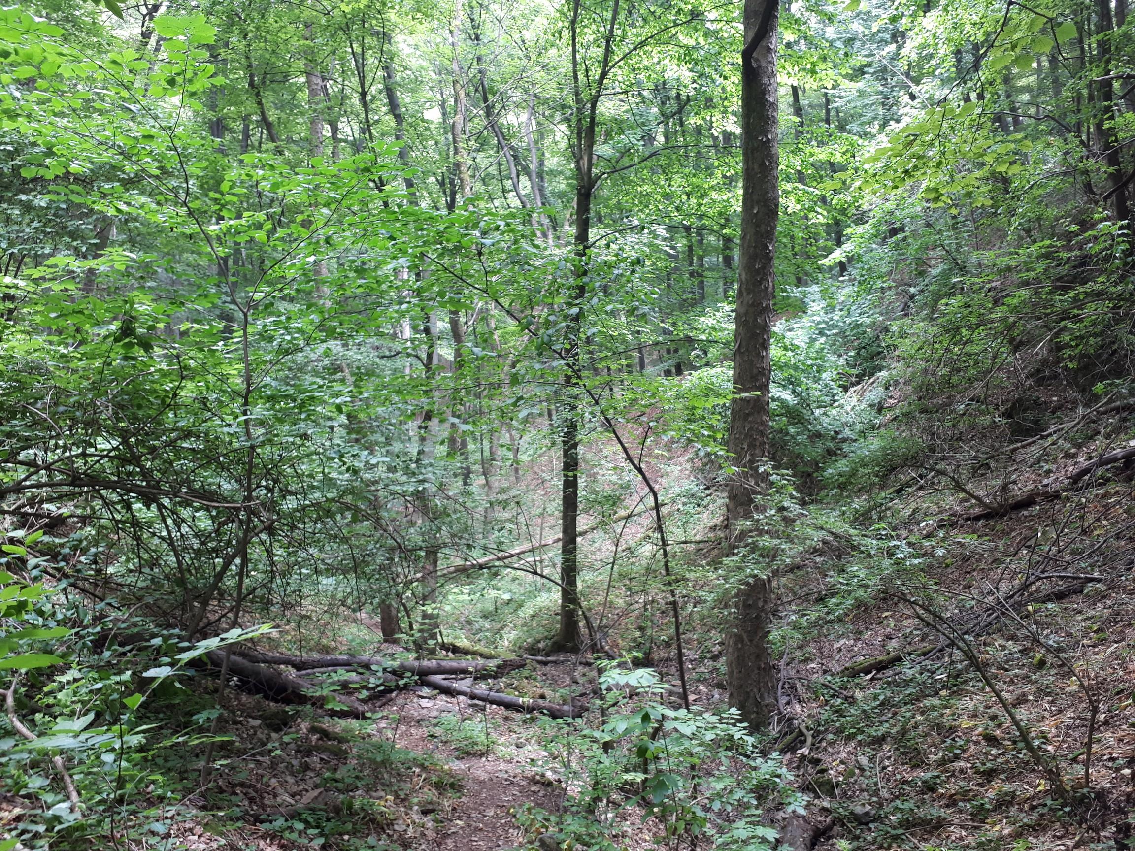 úttalan utak, kidőlt fák