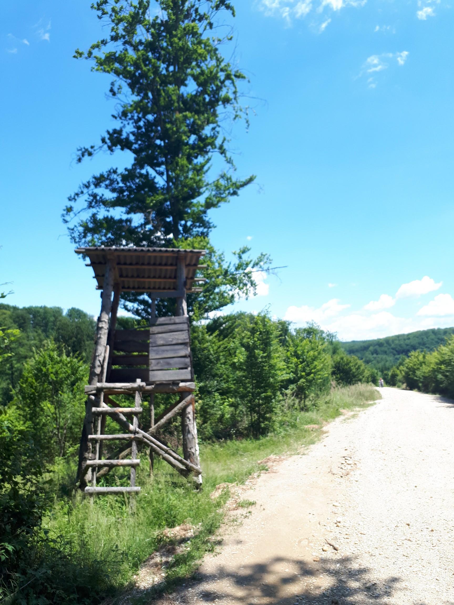 erdészeti út
