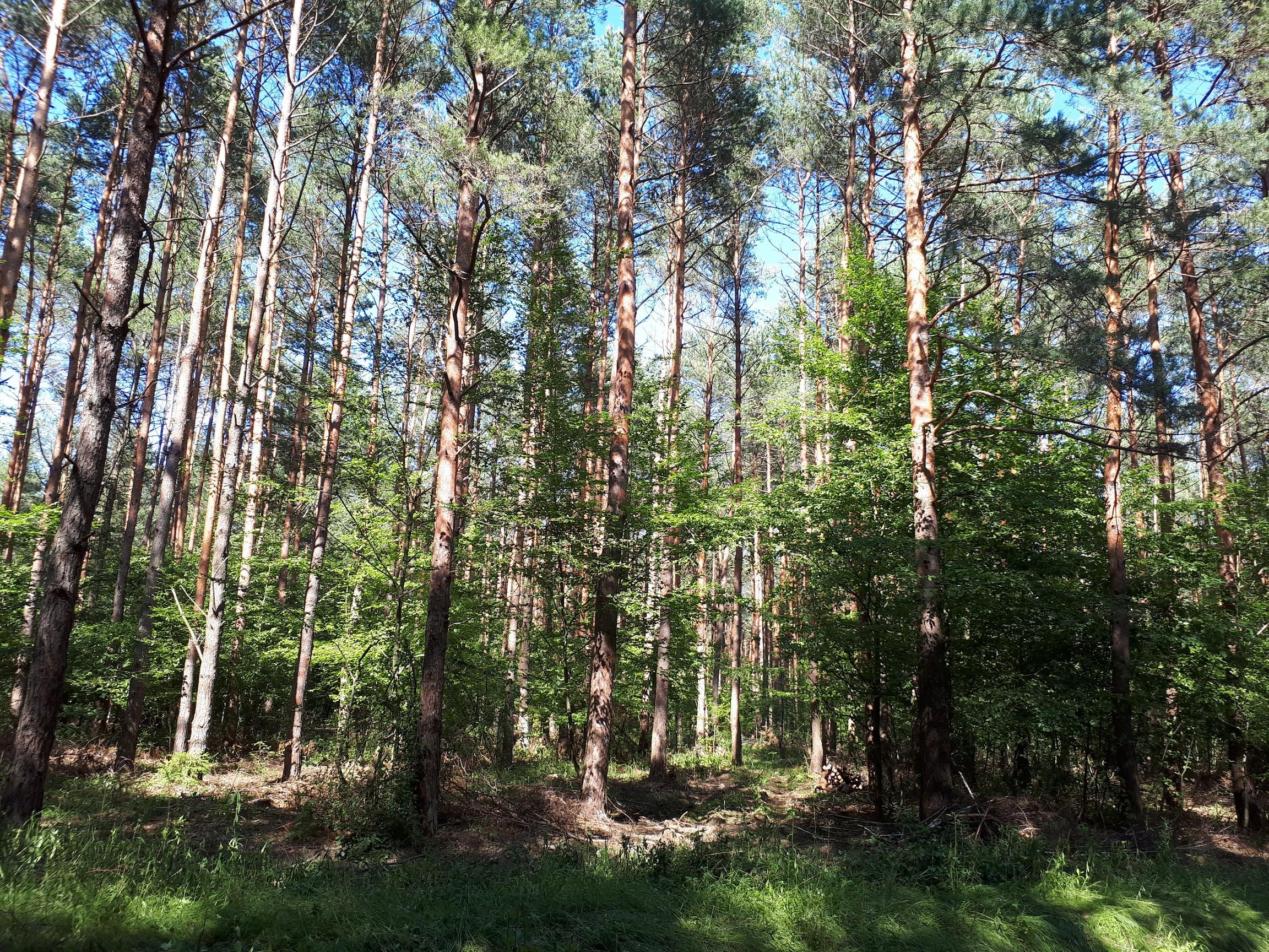 erdő Szalafő felé