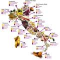 Jellegzetes ételek és borok tartományról tartományra