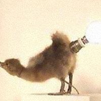 Design paralámpák #3 - Lámpa preparált állatkából