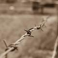 Auschwitzból Szibériába