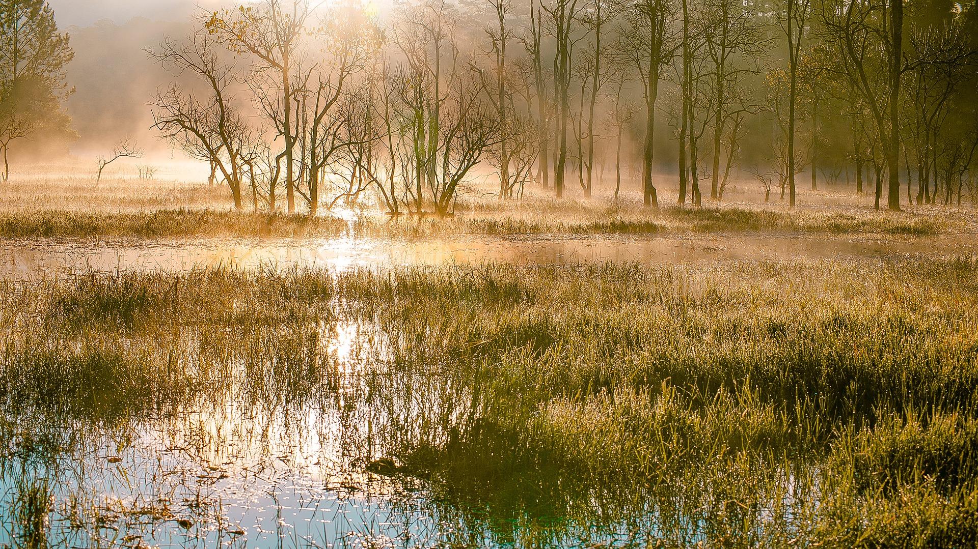 swamps-3057911_1920.jpg