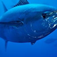 Omega 3 halolajak minősége