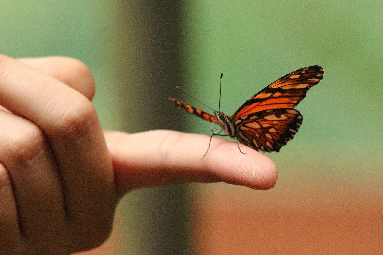 butterfly-5093552_1280.jpg