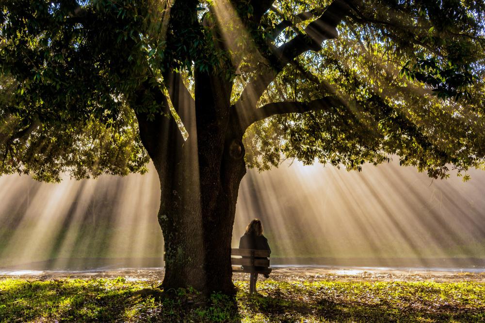 lonely-person-sitting-bench-old-oak-tree-torre-castello-siena.jpg
