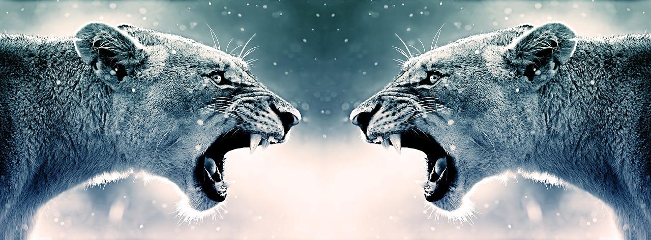 roar-3528376_1280.jpg
