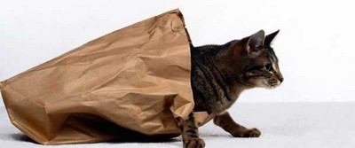 Angol idiómák - Let the cat out of the bag