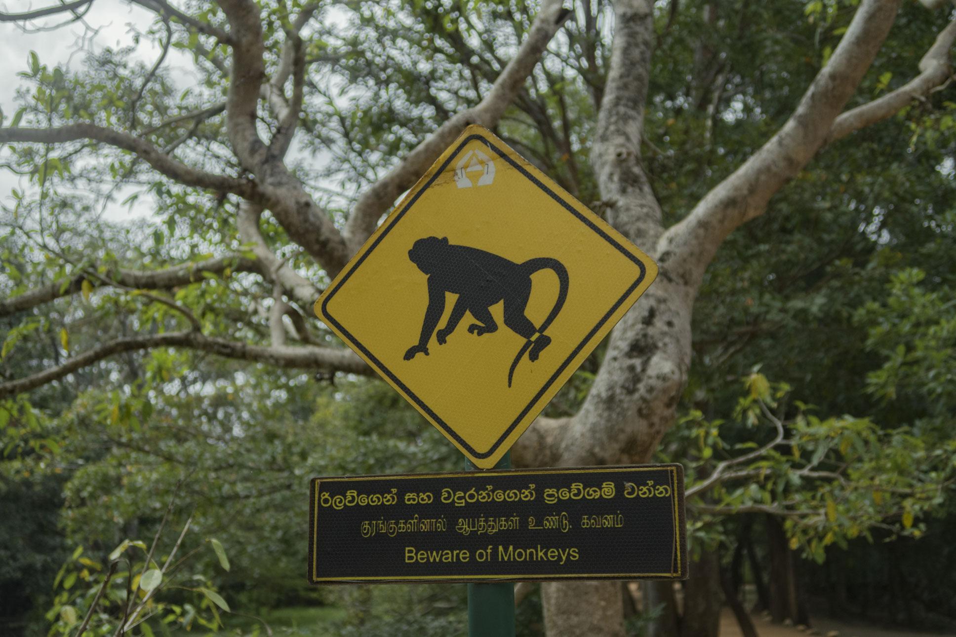 Srí Lanka randevúk
