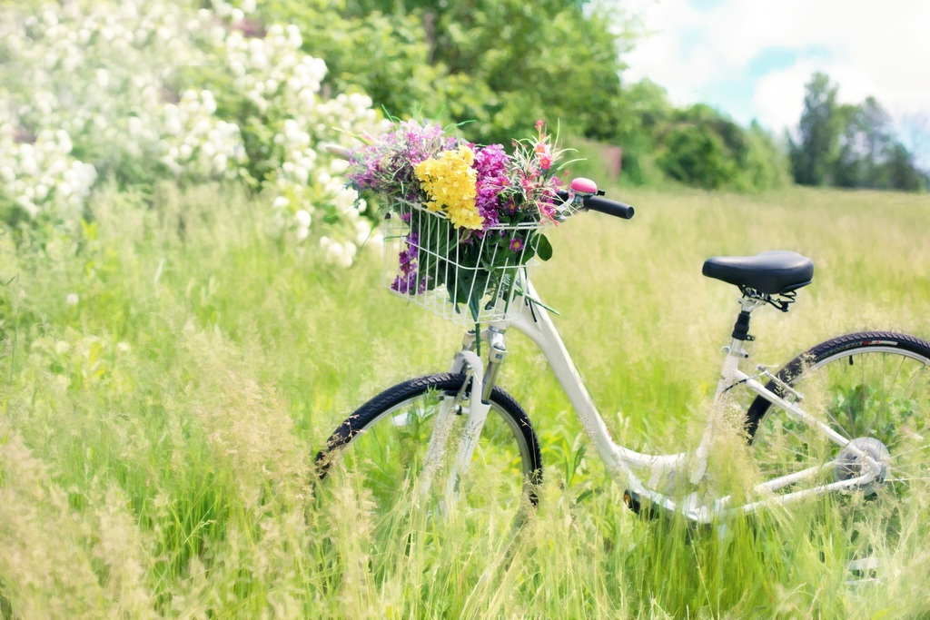 grass-lawn-meadow-prairie-countryside-flower-876284-pxhere_com.jpg