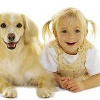 Egyenlő egy kutyaév hét emberi évvel?