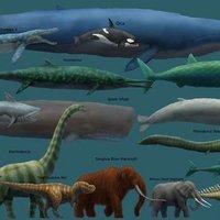 A világ legnagyobb állatai