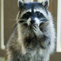 Anya, megtarthatom a mosómacit?