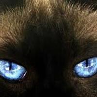 A világ az állatok szemében