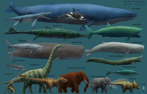 Az állatok mérete
