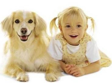 dog-breed-pictures.jpg