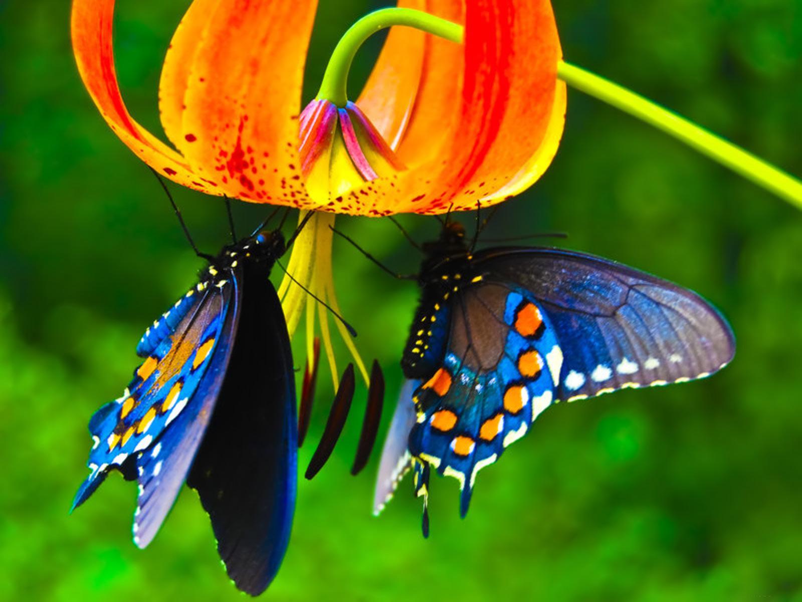 pillangok.jpg