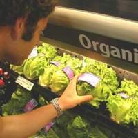 Bio élelmiszerek Vs. rendhagyó ételek