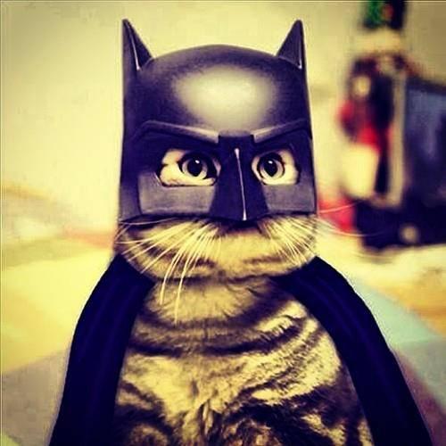 batman_cat.jpg