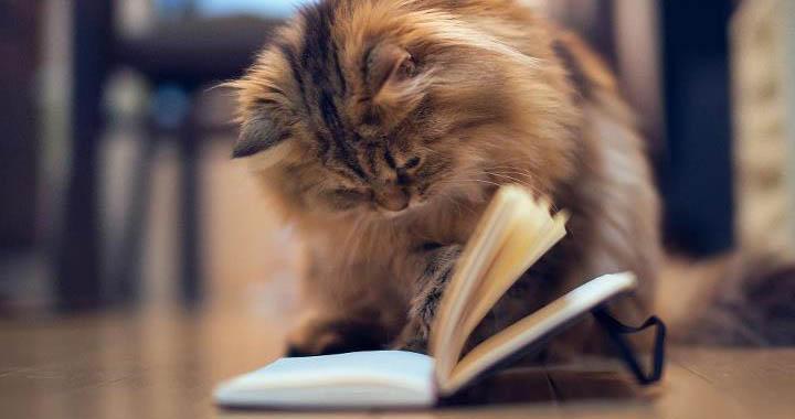cat-education.jpg