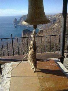 ring_the_bells_for_caturday.jpg