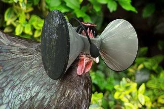 virtual_chicken_reality.jpg
