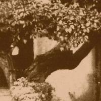 """""""Feketén bólingat az eperfa lombja"""" - Selyemhernyó-tenyésztés Zalátán (1901-1902)"""