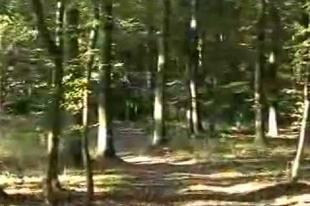 Az Ormánság hagyományai és mondavilága