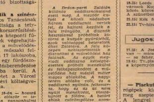 Megsárgult újságlapok - Vaddisznó a művelődési ház ablakában (1968)