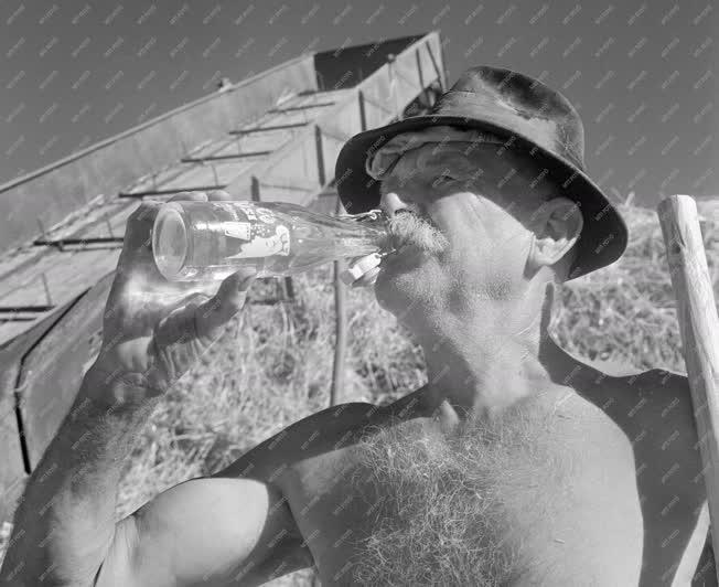 Sellye, 1961. július 17. Sellye környéki betakarító munkás Hüsi márkanevű üdítőitallal frissíti magát munka közben. A sellyei földműves-szövetkezetben a négyféle ízben előállított itallal naponta 1000-1200 csatos üveget töltenek meg, s jövőre ezt a mennyiséget még tovább növelik. MTI Fotó: Kovács Lajos