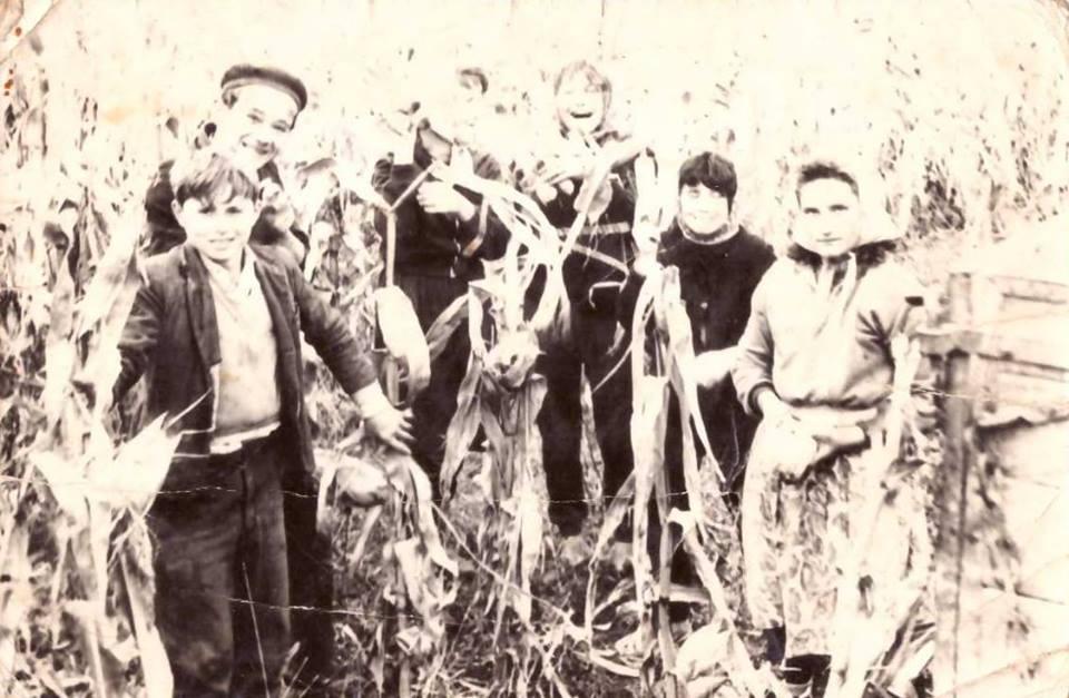 Kukoricásban: Szata Ferenc, Rédling József, Mészáros Lenke, Nagy Sándorné, Kövesi Margit, Nagy Józsefné, Szántics Magdolna