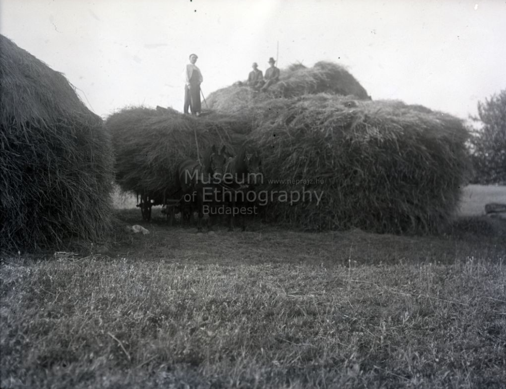 Búzahordás, asztagrakás<br />Vajszló, 1934<br />ff., üvegnegatív, 9x12 cm