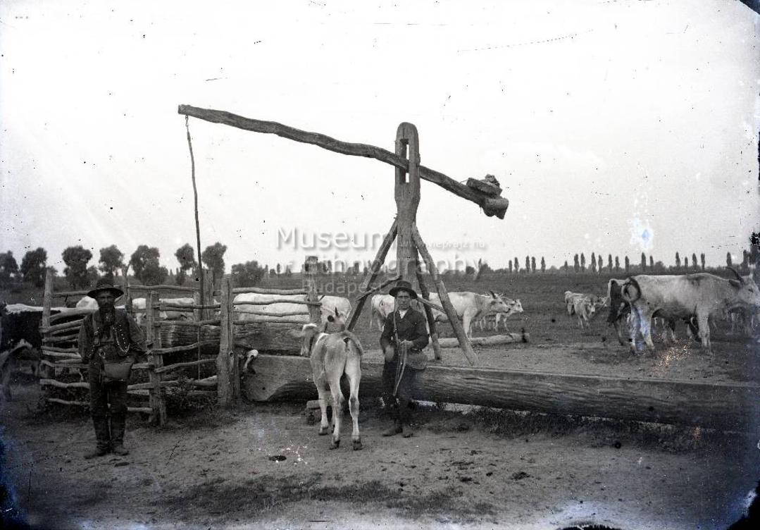 Tehéncsorda az itatónál, gulyások<br />Vajszló 1910-es évek<br />A helységnév bizonytalan, lehetséges, hogy a fotó Páprádon készült<br />ff., üvegnegatív, 13x18 cm