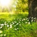 Tavaszi bakancslista