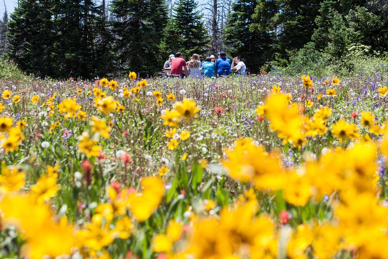 flower-meadow-1143739_1280_1.jpg