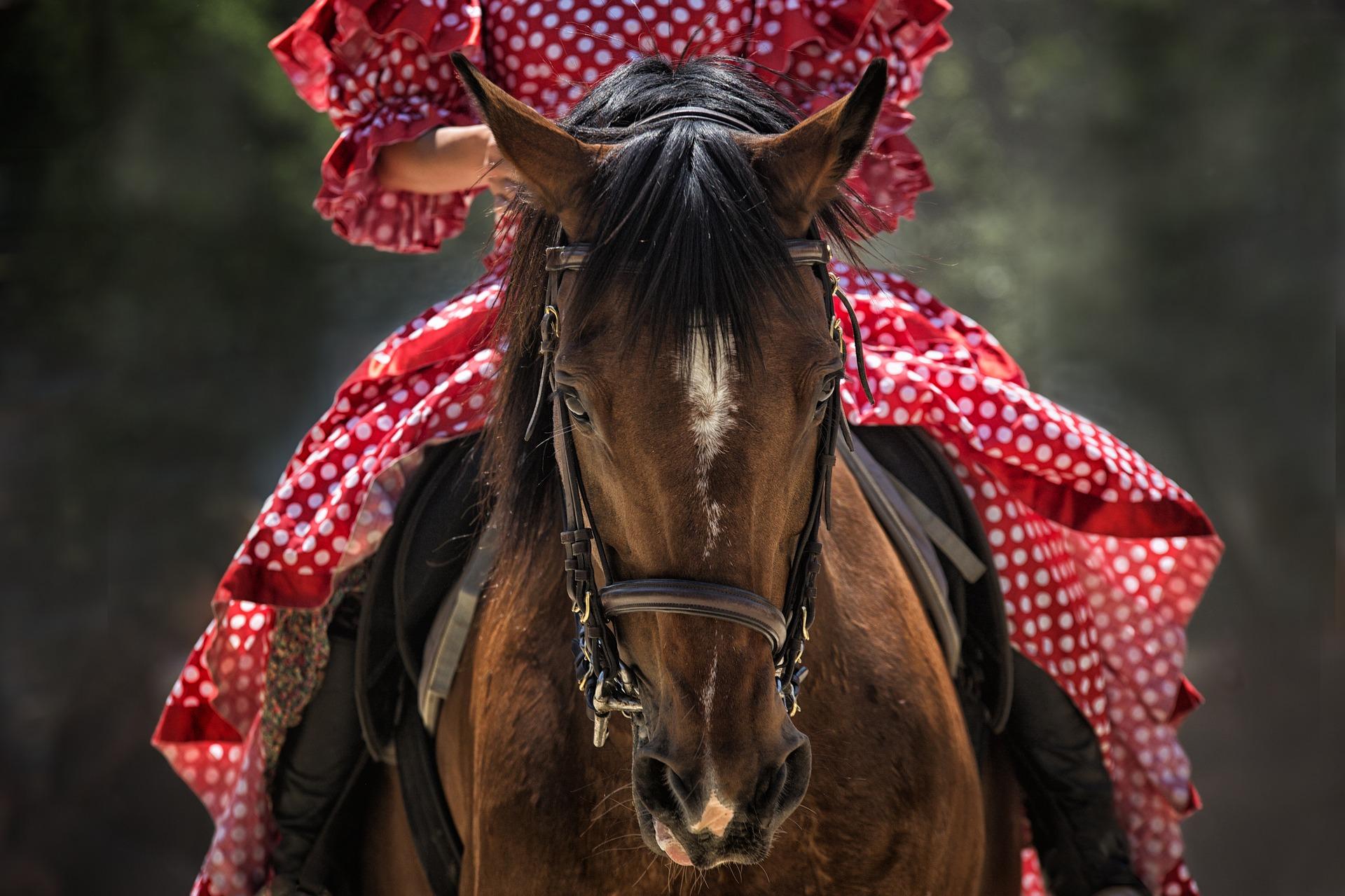 horse-1139142_1920.jpg