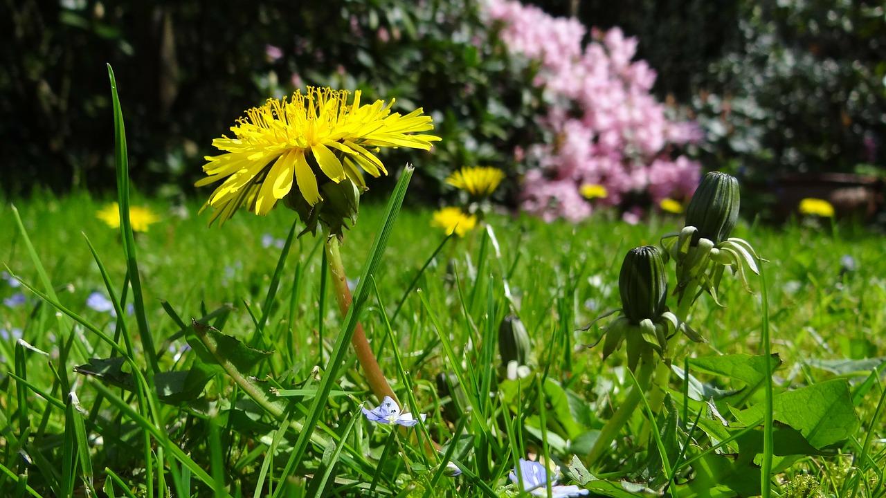 meadow-43467_1280.jpg