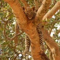 Szafari Tanzániában (Kelet-Afrika III.)