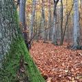 Ködös október Zemplénben