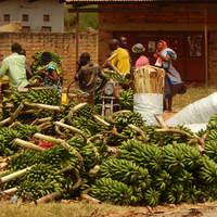 Egy hét Ugandában (Kelet-Afrika I.)
