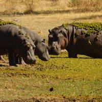 Botswana - első rész
