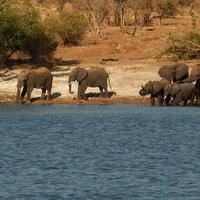 Chobe Nemzeti Park - Botswana, második rész
