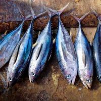 Több száz észak-koreai orvhalászt fogtak el az oroszok