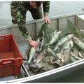 Tetten ért orvhalászok a Tisza-tavon