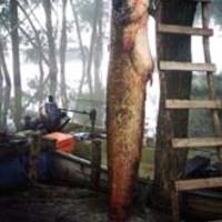 Magyar horgászbandák fosztogatnak Olaszországban